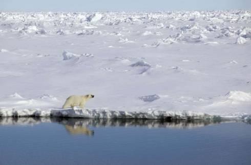 Описание природы острова гренландия
